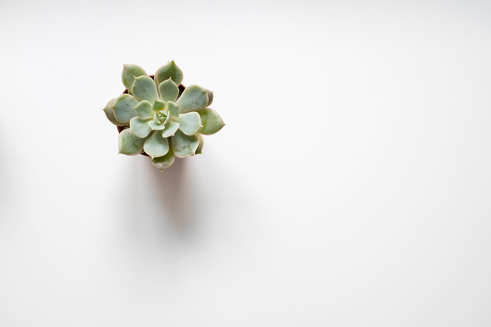 small succulent plant  on white backgrou