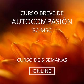 sc-msc web.jpg