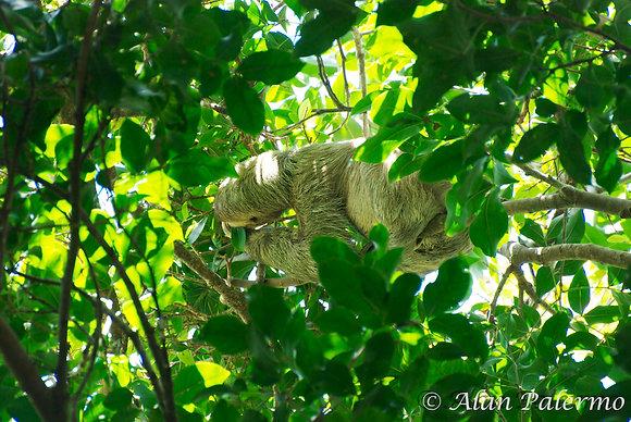 Furry Branch