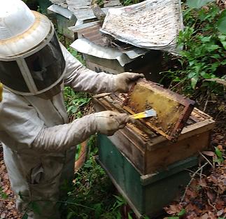 MUA en apiario.png