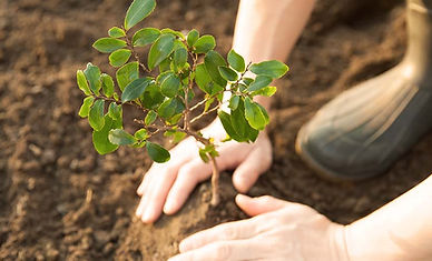 reforestation-americas-feed.jpg