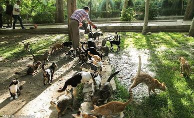 feeding cats.jpg