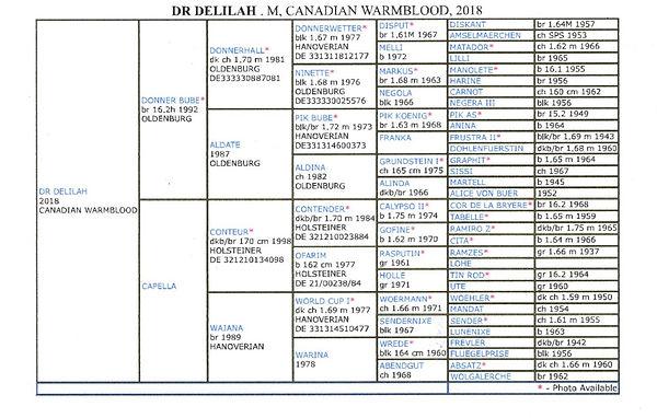 DELILAH PEDIGREE20201102_22390991 (2).jp