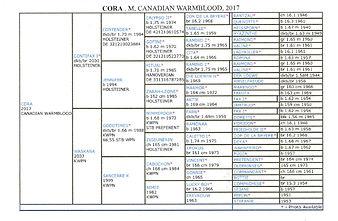 cora pedigree20201102_22052692 (2).jpg