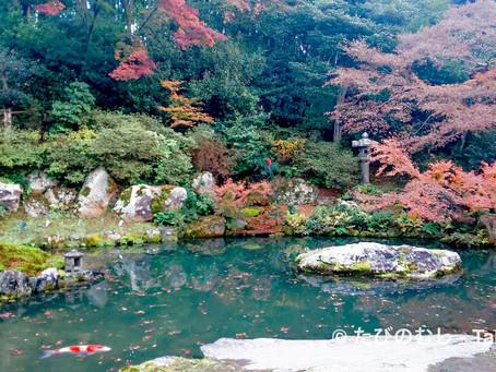 晩秋の趣ただよう青蓮院/Late Autumn Garden at Shoren-in Temple