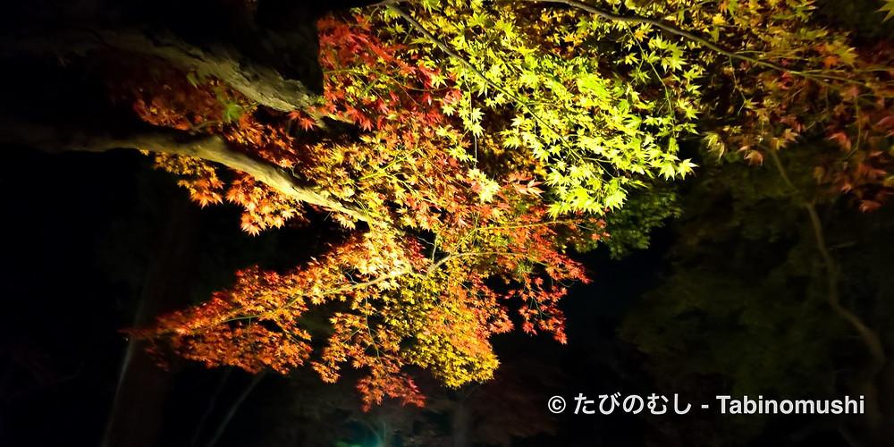 大原野神社/ Oharano shrine