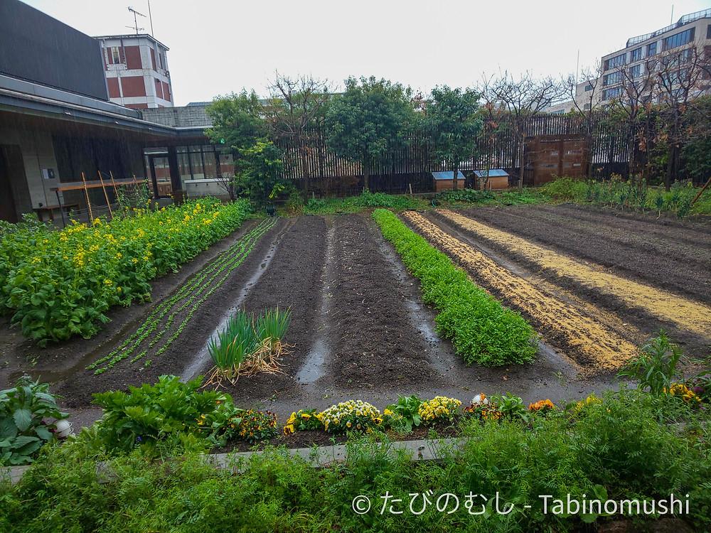 六角農場 /Rokkaku Firm