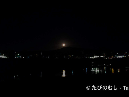 萩と月/Bush Clovers And The Moon