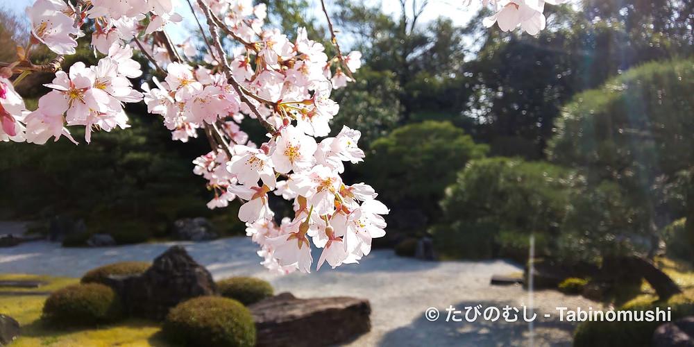 友禅苑/Yuzen-en Garden