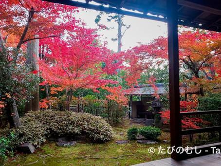 紅葉を訪ねて大法院・桂春院へ/A Joyful Afternoon With Beautiful Autumn Views