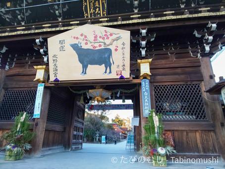 北野天満宮と牛/Kitanotenmangu And Cows