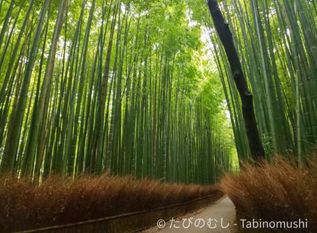 嵐山の竹林/Bamboo Forest at Arashiyama