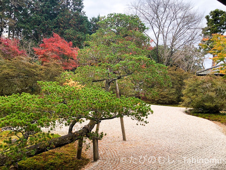 曼殊院の紅葉/Mansyuin in Autumn