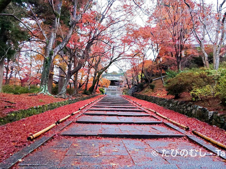 晩秋の毘沙門堂で紅葉を堪能!/Guided Tour at Late Autumn Bishamondo