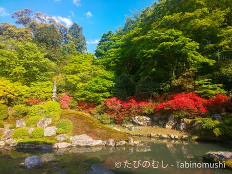 新緑の青蓮院/Shoren-in with verdant plants