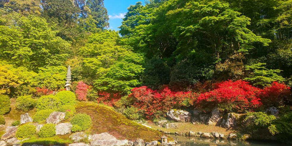 【季節のツアー】緑豊かな京都の緑豊かなツアー