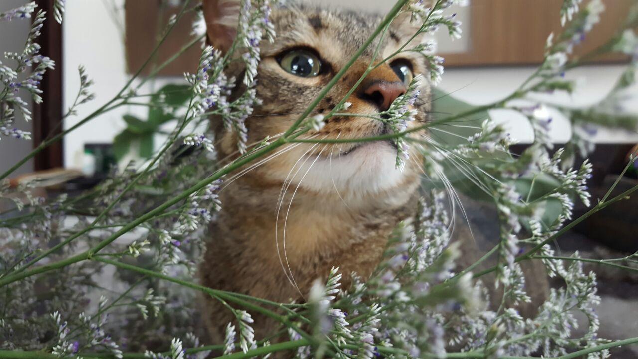 novo gato cris2