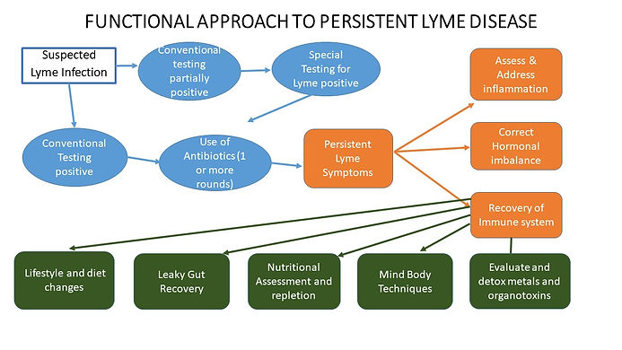 FUNCTIONAL APPROACH TO PERSISTENT LYME D