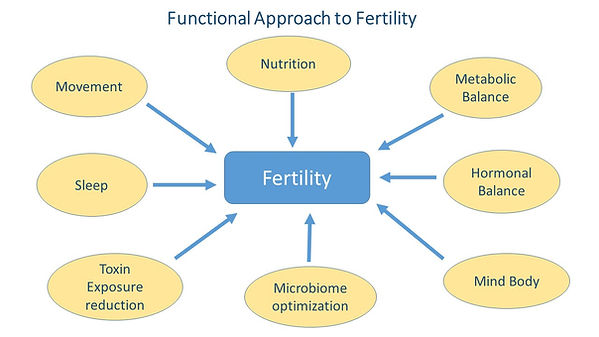 Functional Approach to Fertility.jpg