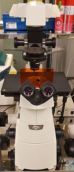 광학현미경.jpg