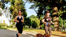 "Monster Miler ""Run with a dog"" tips make headlines!"