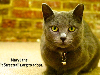 It's Mary Jane's turn to find a home for the holidays!