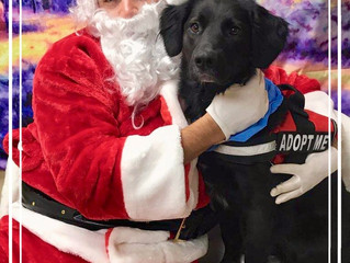 All Tufts wants for Christmas is a family in a home he can call his own.