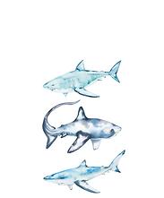 sharks...png