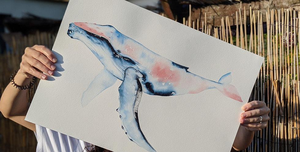 Maravilha- Humpback whale