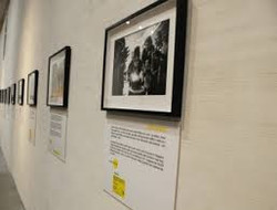 The Other Hundred Exhibition