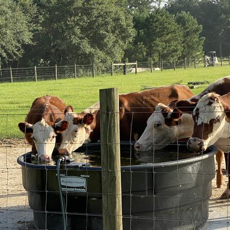 Farming and the Church