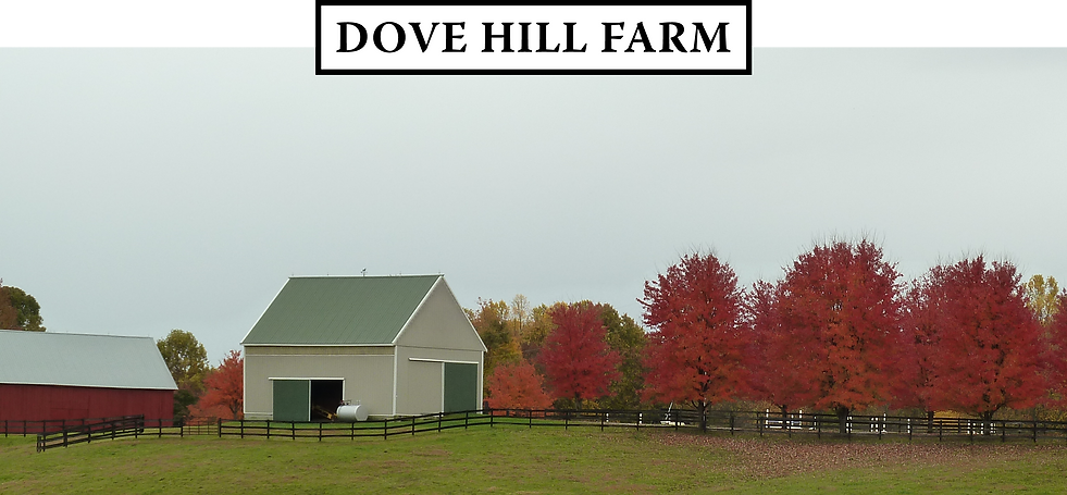 205_Mill_Swamp_Rd_Dove_Hill_Farm_Storgae_Buildings