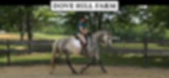 205_Mill_Swamp_Rd_Dove_Hill_Farm_Horses