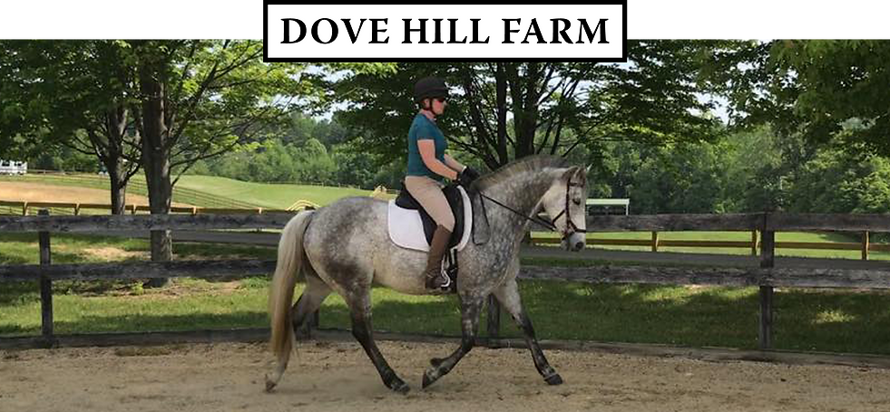 205_Mill_Swamp_Rd_Dove_Hill_Farm_Horses