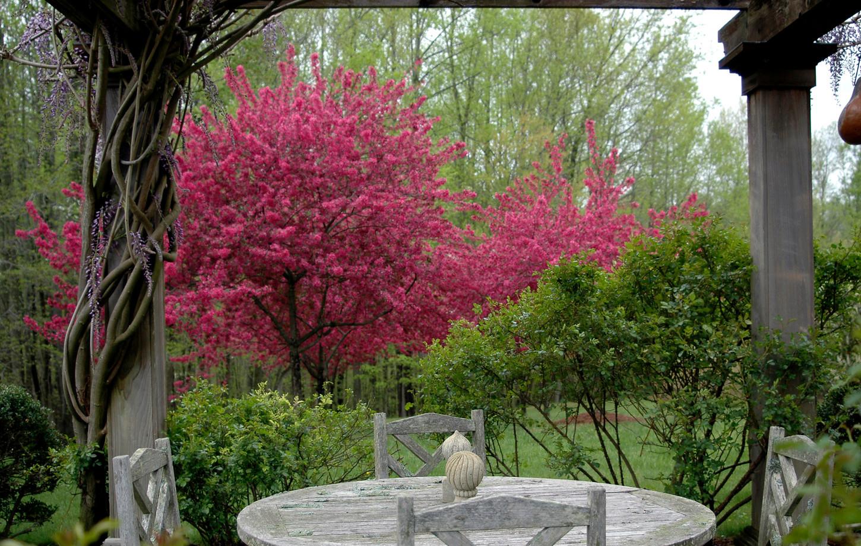 Pergolaand Cherry Trees (Spring)
