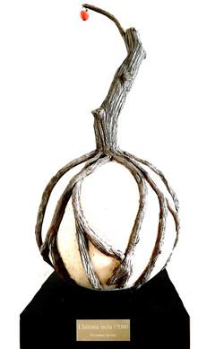L'ultima mela (The last apple).