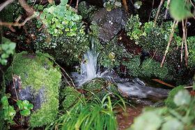 川場村の湧水