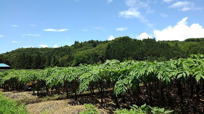 田口農園2020撮影_07.jpg