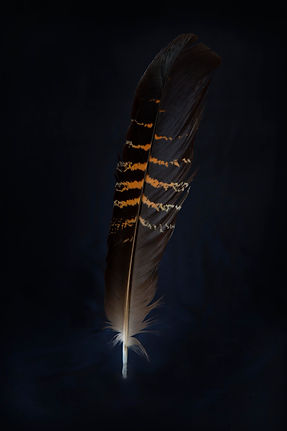 Female feather-signed2.jpg