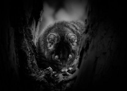 Possum Jpg.jpg