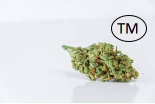 Maine marijuana lawyer