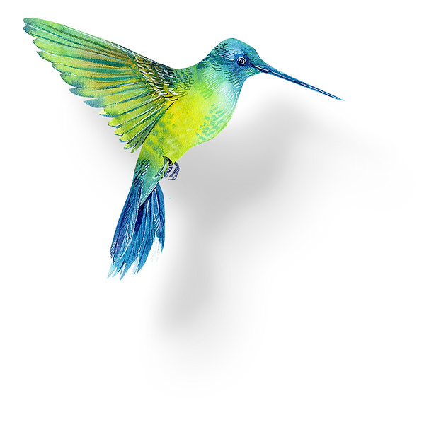 kolibri2.png