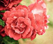 lulalola.wordpress.com
