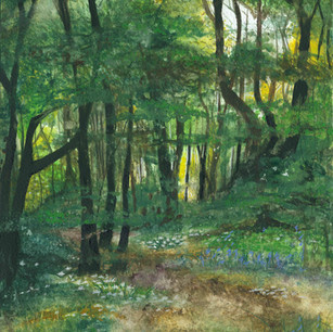 Eltringham Woods , Northumberland