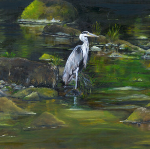 Heron on River Rede, Northumberland