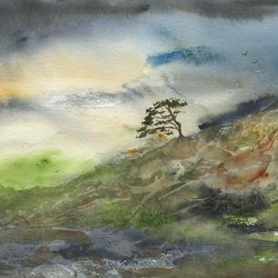 Lone Tree, Northumberland