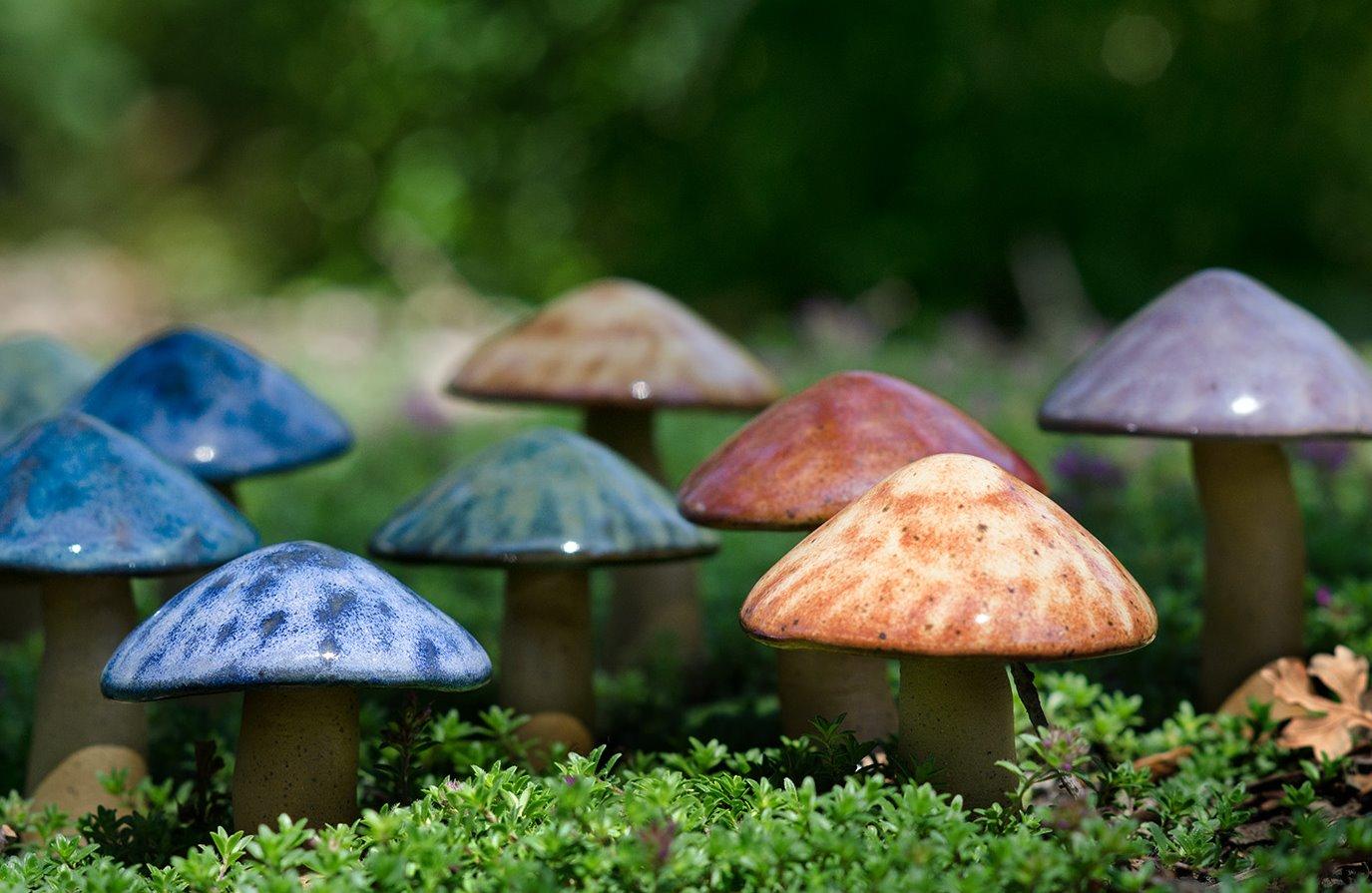 Mini Mushrooms_edited