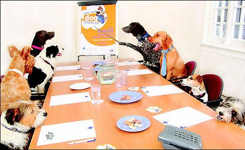 Akron Dog Park General Meeting