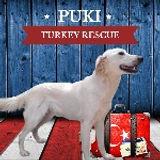 PUKI2_edited.jpg
