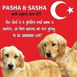 pasha%2520sasha_edited_edited.jpg